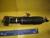 Mercedes Benz - Strut - Shock - 2303204513